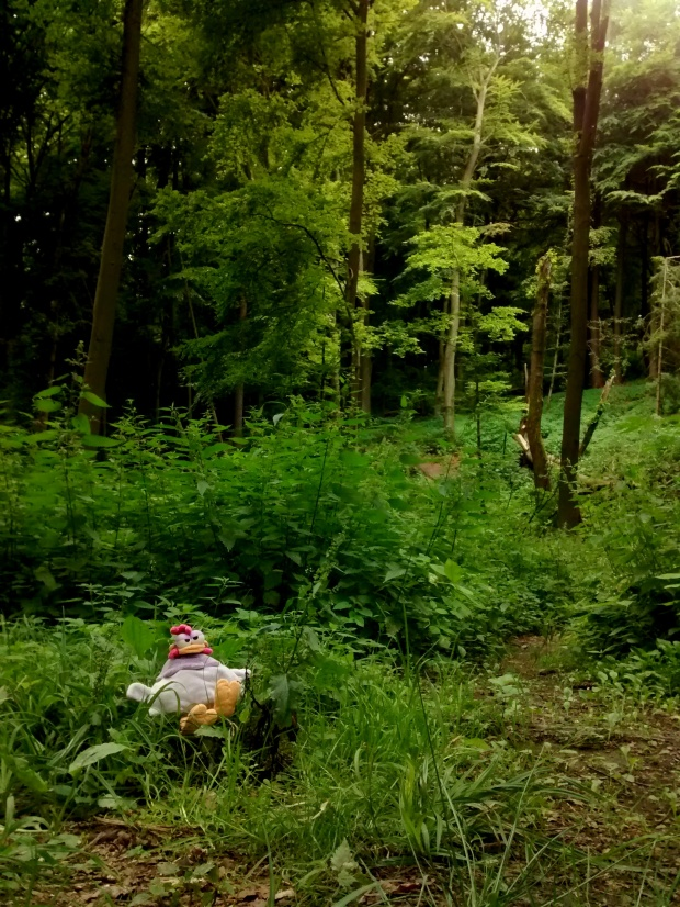 ¿Se habrán inspirado los hermanos Grimm en este bosque para escribir