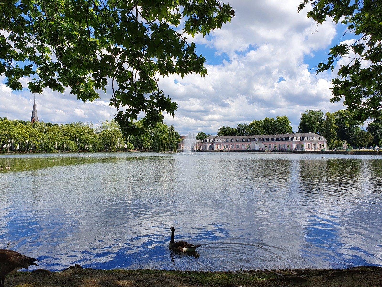 Un ganso nadando tranquilamente por el estanque del Palacio de Benrath.